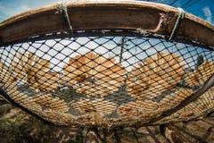 suszyć ryb Zdjęcia Royalty Free