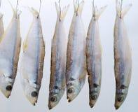 suszy ryba zdjęcie stock