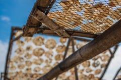 Suszy ryba 8 Fotografia Stock