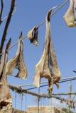 Suszy rybiego Formentera Zdjęcia Royalty Free