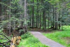 Suszy spadać drzewa blisko ścieżki Obraz Royalty Free