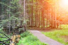 Suszy spadać drzewa blisko ścieżki w miasto parku Zdjęcia Stock