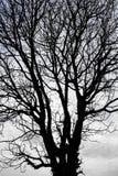 suszy sylwetki drzewa fotografia stock
