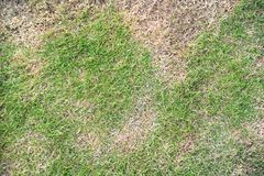 Suszy trawy Fotografia Stock