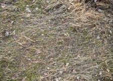 Suszy, w zesz?ym roku ` s trawa Stara s?omiana t?o tekstura Przez starej przegni?ej trawy ?ama m?odej trawy obraz stock