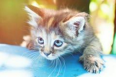 Sute ha barrato il gattino nell'erba verde all'aperto Fotografie Stock Libere da Diritti