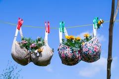Sutiã cavilhado em uma linha de lavagem com as plantas que crescem nelas imagens de stock