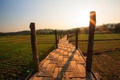 Sutongpe długi bambusa most w Tajlandia obrazy stock