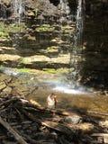 Australian Shepherd enjoying the falls. Beautiful Australian shepherd swim Stock Photo