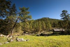 Suumer在奥地利阿尔卑斯 库存图片
