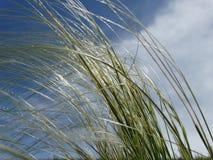 Suuny gräsplan, i vinden Arkivbild