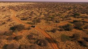 SUV управляет вдоль следа в саванне Намибии сток-видео