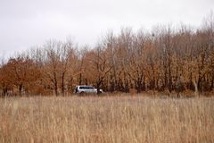 Suv is in the autumn forest in cloudy weather. Grey color suv is in the autumn yellow wet forest in cloudy weather stock images