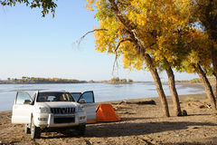 Suv with autumn trees royalty free stock photography
