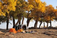 Suv avec des arbres d'automne photographie stock