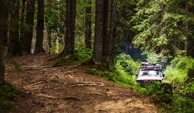 SUV driving in the woods Royalty Free Stock Image