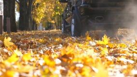SUV poderoso que conduz na estrada do parque sobre as folhas de outono amarelas no dia ensolarado A folhagem de outono colorida d vídeos de arquivo
