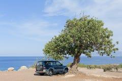 SUV sotto l'albero dal mare Fotografia Stock Libera da Diritti
