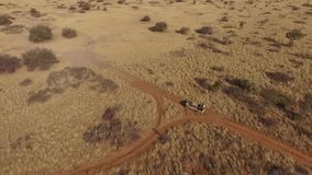 SUV with tourists traveling on a dirt road on a safari. A jeep with an open trunk travels across the savannah of Namibia. A view of the savanna in Africa stock footage