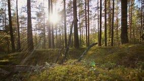 Suwak rusza się z lewej strony Dolly ruch wzdłuż zielonego lasu zdjęcie wideo