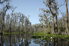 Suwannee河红色足迹, Okefenokee沼泽全国野生生物保护区 免版税库存图片