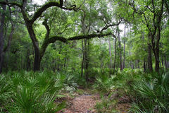 Suwannee Hiking. Hiking to Little Shoals on the Suwannee River Royalty Free Stock Images
