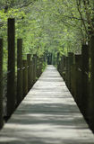 Suwannee River Boardwalk Stock Image