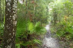 Suwannee River Trail Royalty Free Stock Photography