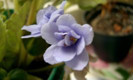 Suzdal blomma royaltyfria foton