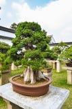 SUZHOU, CHINA - 23 de octubre de 2013: Árbol de los bonsais en jardín humilde del ` s del administrador Imagen de archivo libre de regalías