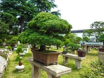 SUZHOU, CHINA - 23 de octubre de 2013: Árbol de los bonsais en jardín humilde del ` s del administrador Fotografía de archivo
