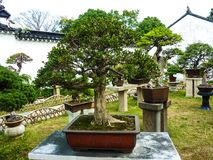 SUZHOU, CHINA - 23. Oktober 2013: Bonsaibaum in bescheidenem Verwalter ` s Garten lizenzfreie stockfotografie