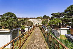 Suzhou Gard Walkway Bamboo Fence Lizenzfreie Stockfotografie