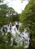 Svälja nedgångvattenfallbetws y samundervisnings- norr Wales Arkivfoton