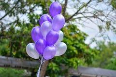 sväller purple Arkivfoton