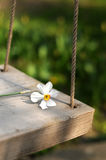 sväng för blommafjäder arkivbilder