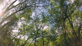 Svänga trädöglan lager videofilmer