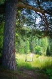 Svängande tomma barns gunga i skog Arkivbild