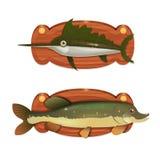 Svärdfisk på träbrädet Arkivfoto