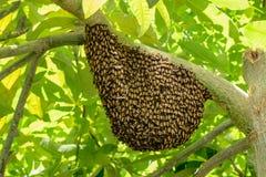 Svärm av wasps Royaltyfri Fotografi