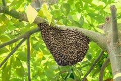 Svärm av wasps Arkivfoton