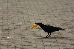 Svärta fågeln royaltyfria bilder