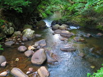 Svärta floden arkivfoto