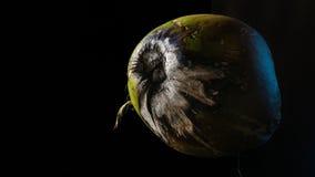 Sväva kokosnöten Royaltyfri Bild