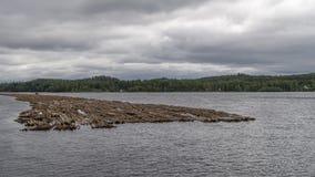 Sväva loggar in Kyronsalmi sjön, Savonlinna, Finland fotografering för bildbyråer