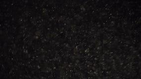 Sväva organiskt damm skimrar partiklar på en svart bakgrund lager videofilmer