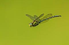 Sväva på den gröna planeten Royaltyfria Foton