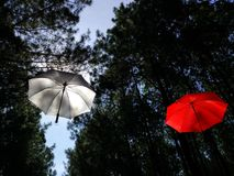 Sväva paraplyer Royaltyfria Foton