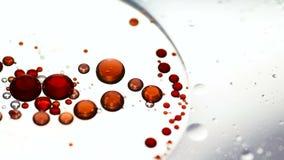 Sväva röda olje- droppar på vattenyttersida lager videofilmer