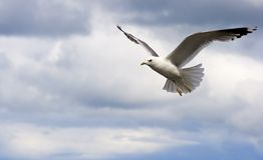 sväva seagullsky Royaltyfria Foton